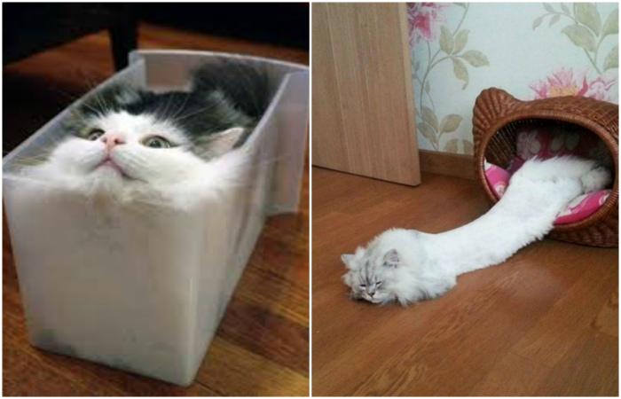 Эти странные коты, способные принимать любые формы.