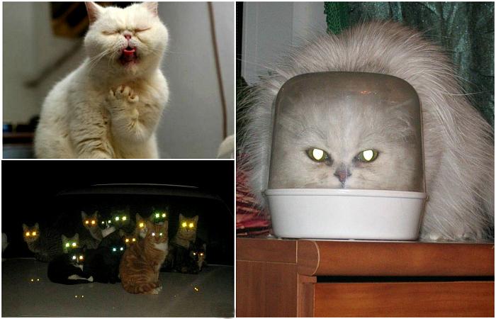 Уморительные фотографии, доказывающие, что коты - инопланетяне.