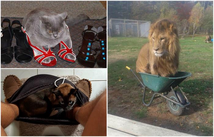 Забавные коты, найденные в необычных местах.