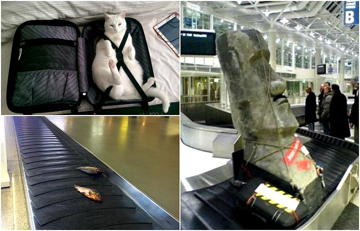 Забавный багаж, который заставит посмеяться от души.