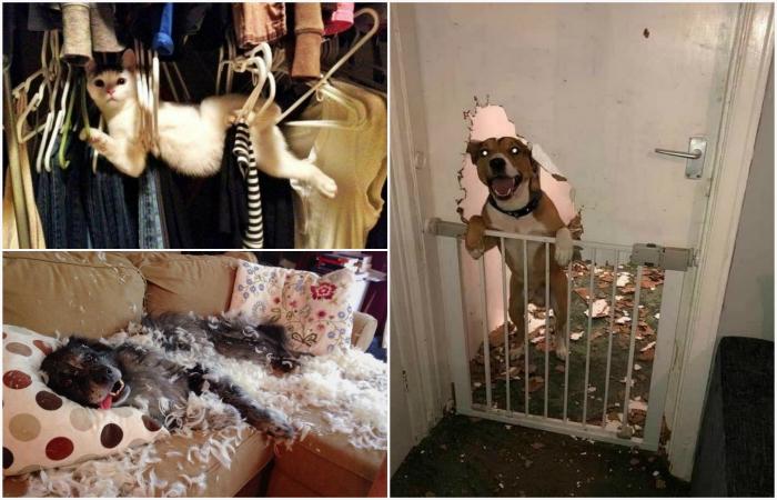 Животные, которые знатно нашкодили и были пойманы с поличным.