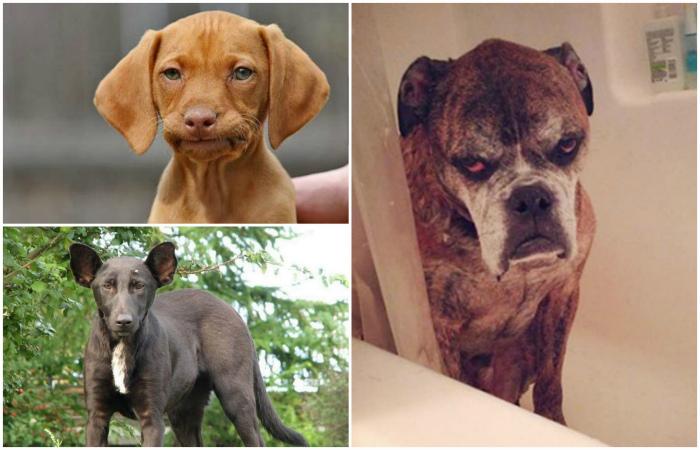 Собаки, чьи глаза говорят о многом.