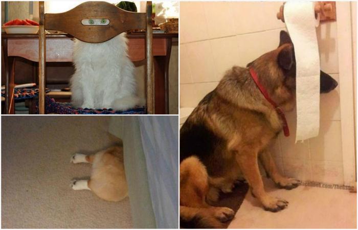Уморительные животные, которые уверены, что спрятались.