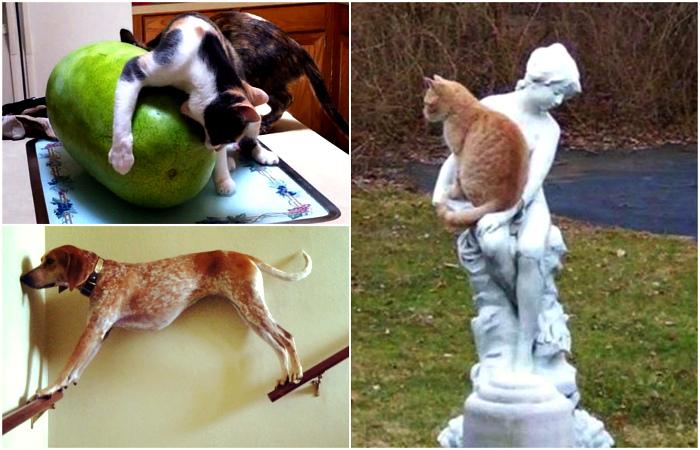 Проделки животных, которые остались одни дома.