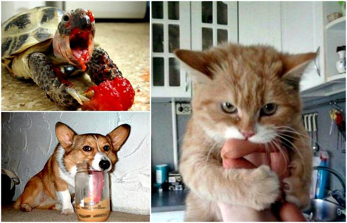Смешные животные, которые сильно проголодались.