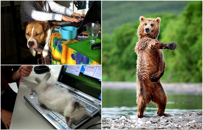 Забавные животные, чье поведение заставит посмеяться от души.