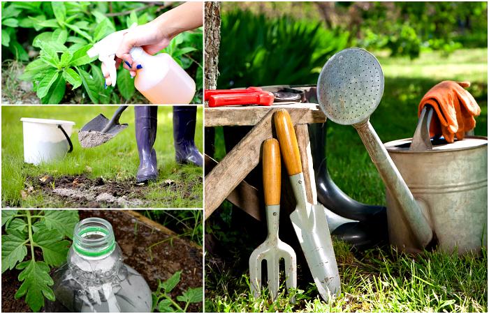 Полезные советы для сада и огорода.