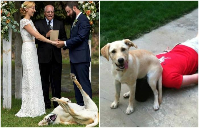 Фотографии, демонстрирующие, что такое жизнь с собакой.