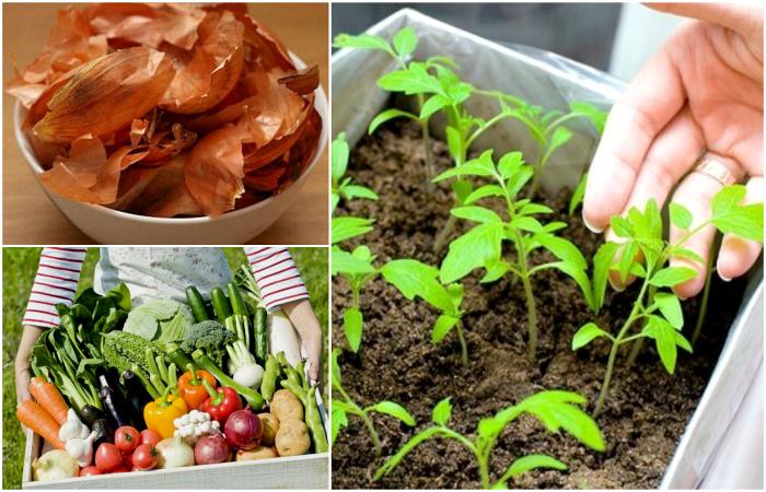 Советы опытных садоводов, которые помогут повысить урожайность своего участка.