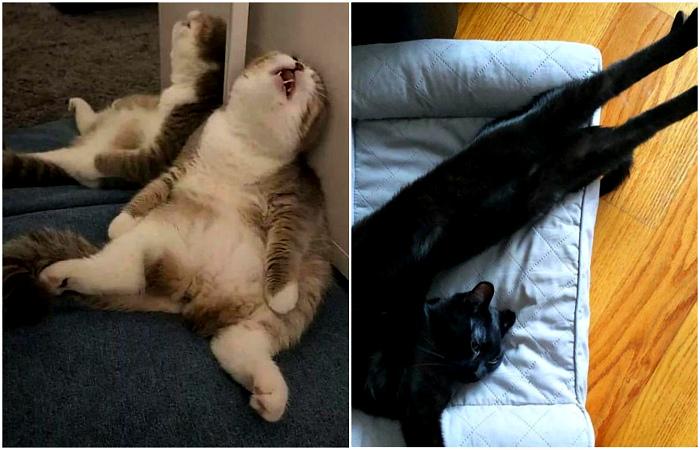 Забавные снимки уставших котов, которые заснули непонятно как.
