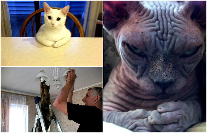 Смешные и зловещие коты, которые ведут себя очень подозрительно.