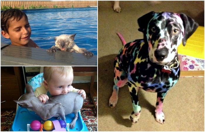 Забавные снимки о взаимоотношениях детей и животных.