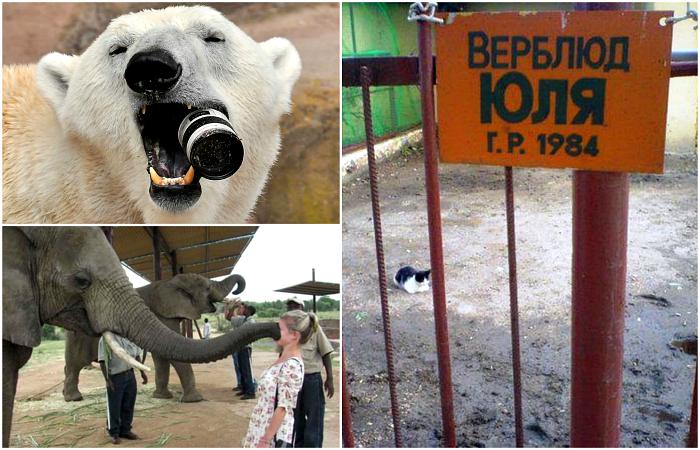 Позитивные снимки из зоопарков.
