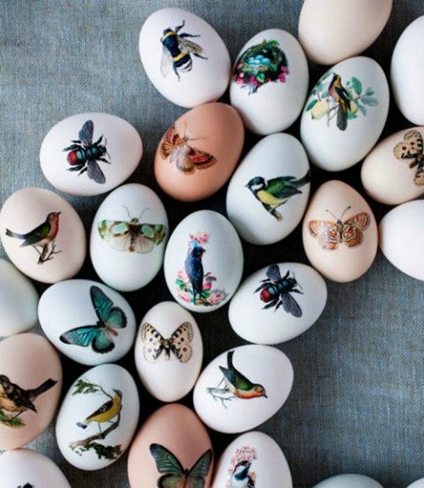 Яйца, украшенные картинками насекомых.