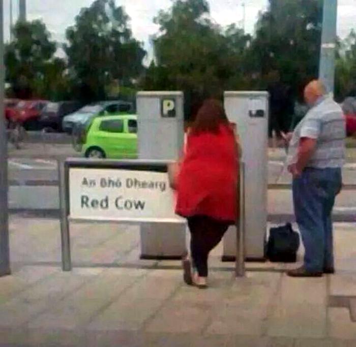 «Красная корова».