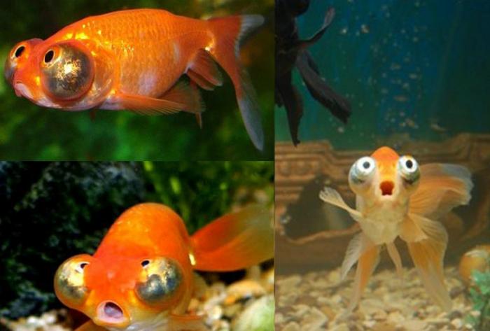 Это золотая рыбка, которая выслушала все новогодние желания.