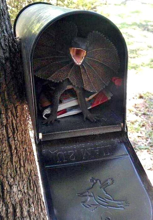 Свирепый охранник почтового ящика. | Фото: БУГАГА.
