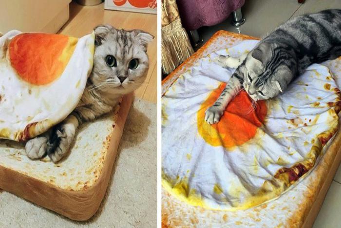 Аппетитная лежанка для кота. | Фото: Dama.bg.