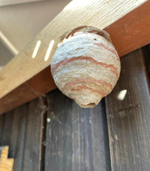 По мнению Novate.ru, осы - прекрасные строители. | Фото: Триникси.