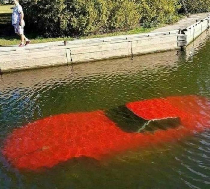 «Ой, а что это такое красненькое виднеется под водой...» | Фото: Twipu.