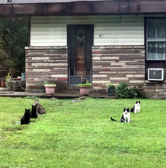 Группировка из 6 котов. | Фото: Imgur.