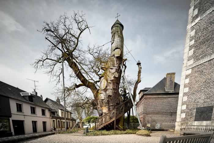 Небольшая часовня во Франции, построенная внутри тысячелетнего дуба.