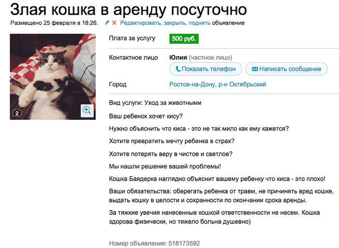 Аренда злой кошки.