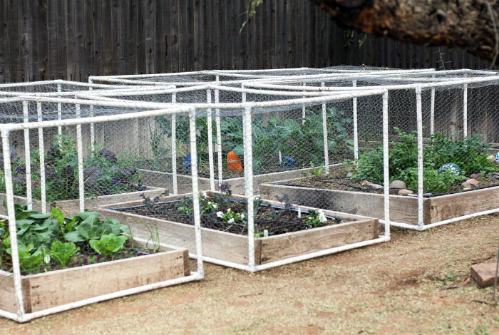 Защита грядок.| Фото: Gardening: Flower and Vegetables.