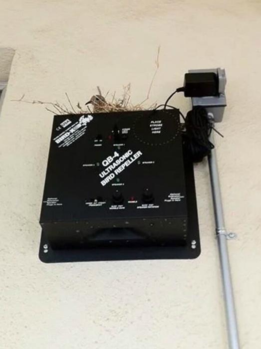 Немного об «эффективности» устройства для отпугивания птиц. | Фото: Mynet.