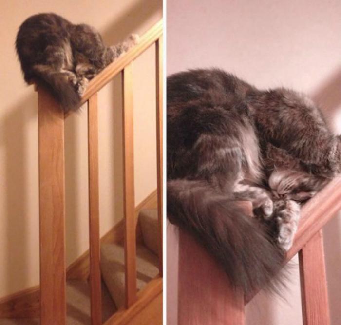 Искусство сна. | Фото: питомцы.