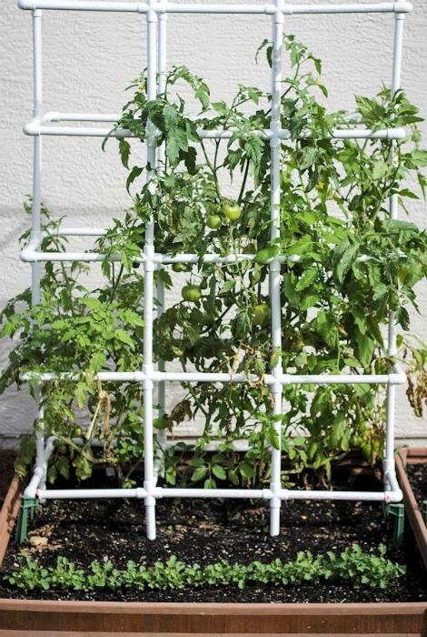 Опора для плетистых растений. | Фото: My Life Abundant.