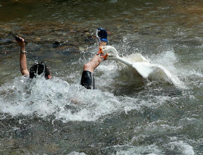 Хранители пруда. | Фото: Дуделка.