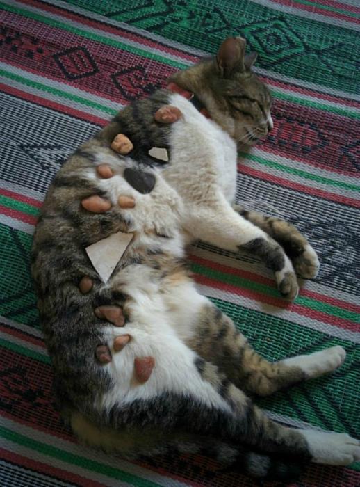 Самые безобидные игры с котом. | Фото: BlazePress.