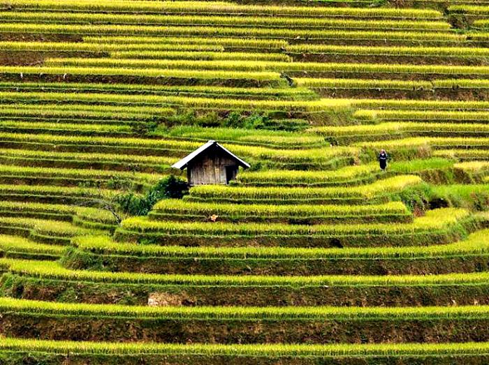 Дом в окружении рисовых террас.