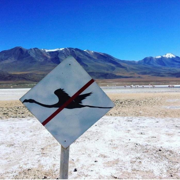 Дорожный знак с птичкой. | Фото: Nastroy.net.