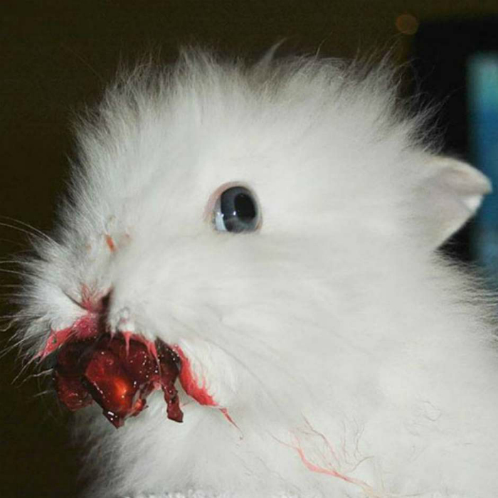 Пугающий кролик.