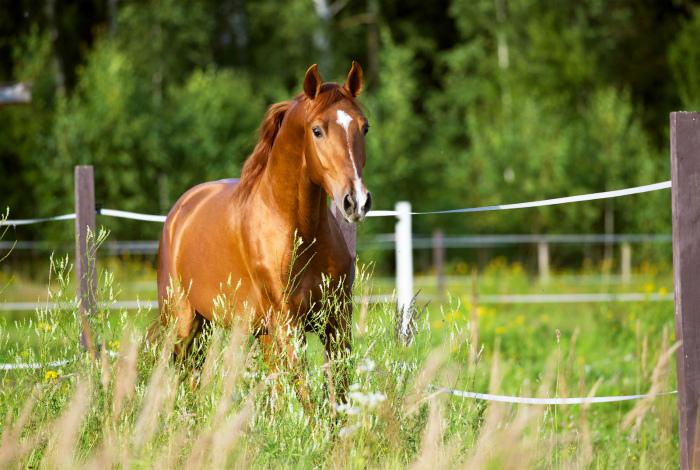 У лошадей не бывает рвоты.