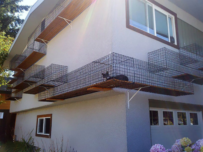 Лабиринт для кошек.