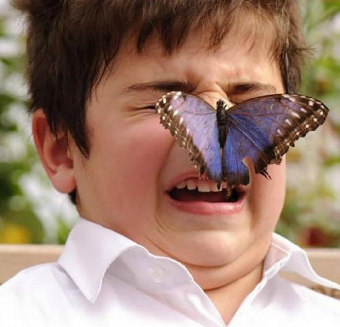 Поцелуй бабочки.
