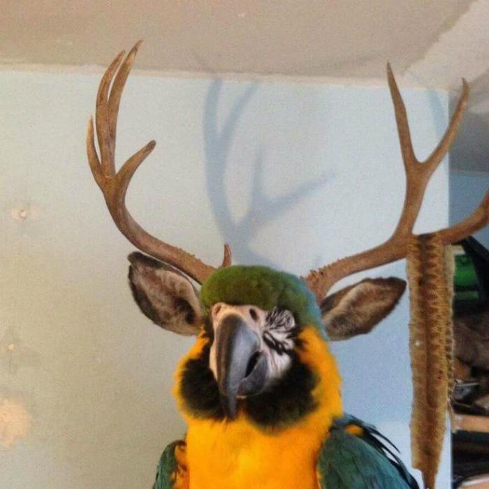 Забавный попугай.