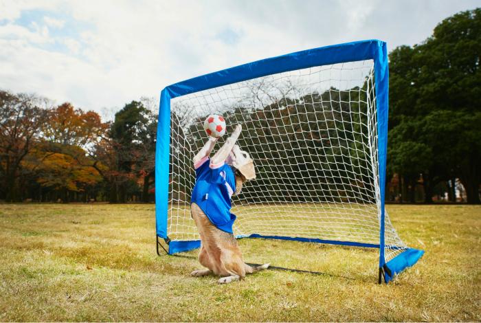 Собака Пурин из Японии смогла поймать лапами 14 мячей за одну минуту.
