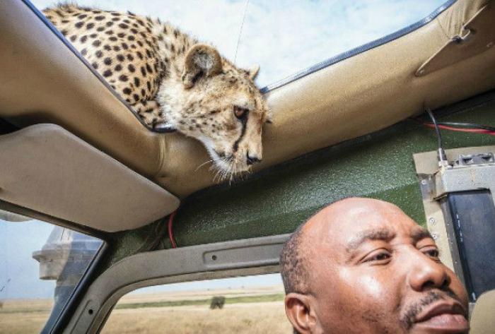 «Когда в машину подсела, киса!»  Фото: Mardentro.ru.