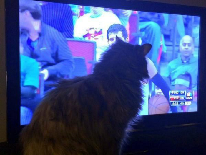 Все коты знают, что последние минуты матчей самые интересные. | Фото: Pinterest.