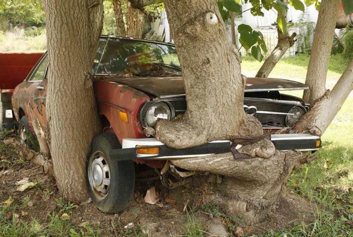 Дерево обняло машину.