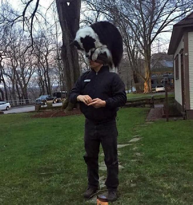 Собака на голове.