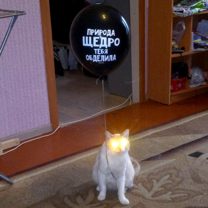 По мнению Novate.ru, эта кошка надо мной издевается! | Фото: pixmafia.com.