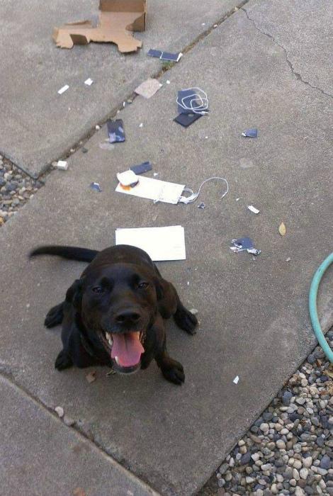 По мнению Novate.ru, этот пес счастлив и вполне горд собой! | Фото: Интересный блог.