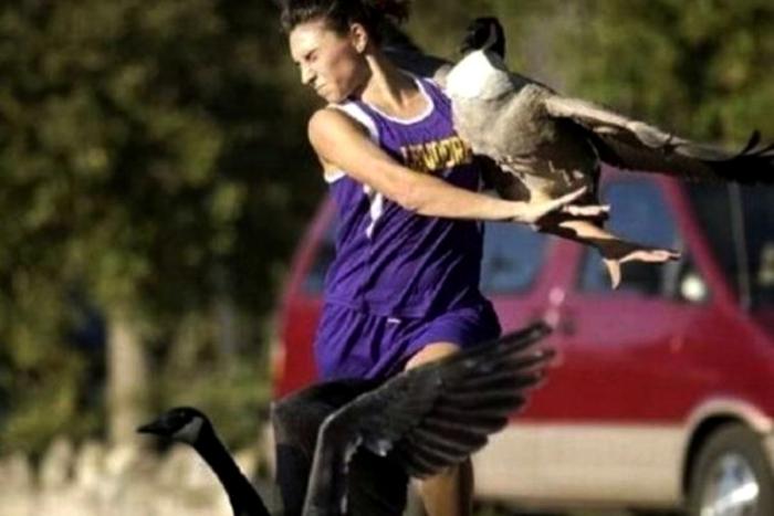 Утки против спортсменки.