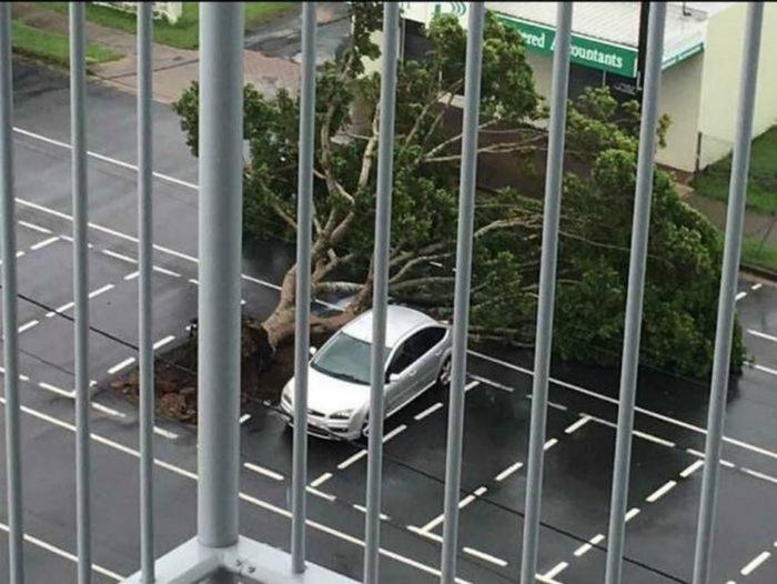 Дерево «припарковалось» рядом. | Фото: Fakten Guru.