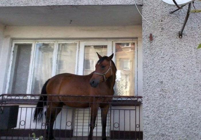 Лошадь на балконе.